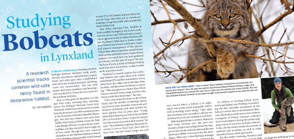 Studying Bobcats in Lynxland