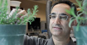Biologist Soheil Mahmoud in the lab with lavender plants.