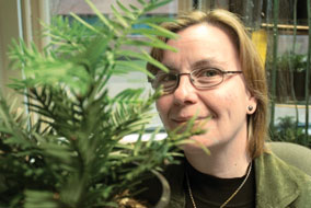 Susan Murch is nurturing 50 small Wollemi pines in her UBC Okanagan office - photo by Bud Mortenson