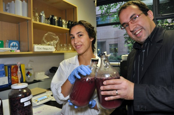 Fourth-year biochemistry student Mariana Galata and Associate Professor of Chemistry Cedric Saucier are in the process of making the first bottles of wine to come from UBC's Okanagan campus.