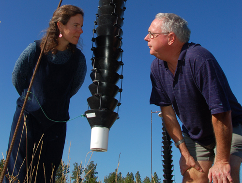 Bob Lalonde and Rebecca Tyson of the Centre for Species at Risk and Habitat Studies are trapping mountain pine beetles to better understand how they move  through urban areas.
