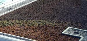 Okanagan Campus green roofs provide natural temperature control.