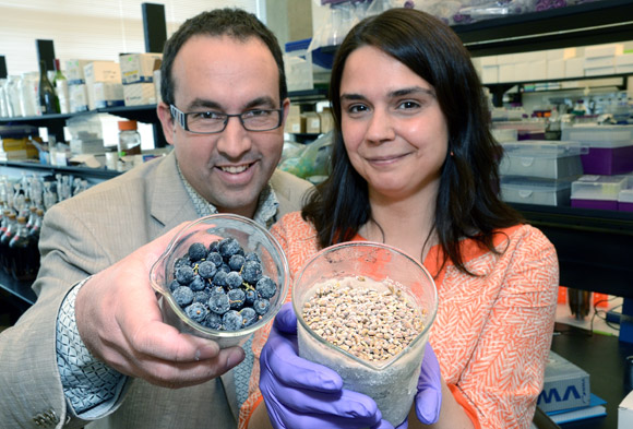 Wine researchers Cédric Saucier, associate professor and head of Chemistry at UBC's Okanagan campus and Adéline Delcambre, a post-doctoral fellow, have discovered 14 previously unknown compounds in red wine and grape seeds.