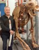 UBC Assoc. Prof. Rob Young stands beside the skeleton of a short-faced bear, an extinct carnivore that is known as an ice age super predator. Young is giving a public lecture about post-dinosaur landscape erosion in the Alberta Badlands on October 15.
