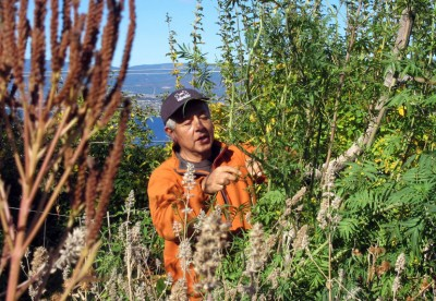 In an organic garden near Summerhill Pyramid Winery, Tirso Gonzales looks over a variety of plants including catnip, mint, nettle, and mustard that grow unfettered in a friend's sanctuary. Photo credit: Gabe Cipes.