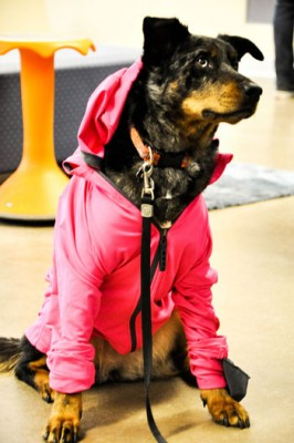 Binfet's dog, Frances, participates in UBC Okanagan's B.A.R.K. program, which helps foster emotional well-being in students.