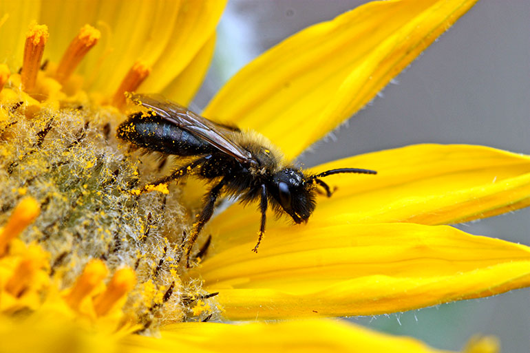 Rebecca Tyson's research offers a new analytical tool which can provide estimates of how far bee pollen will travel. Photo credit: Bob Lalonde, associate professor of biology.