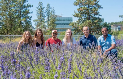 Associate professor Soheil Mahmoud (second from right) with his research team at UBC's Okanagan lavender field.