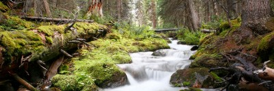 Forests are the key to fresh water