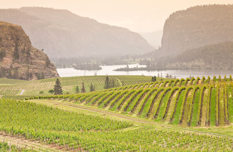 Photo of Okanagan vineyard surrounded by forest fire smoke