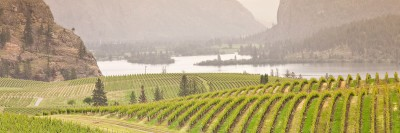 UBC researchers map smoke taint in wine grapes