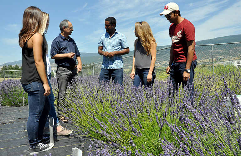 UBC Okanagan Professor Soheil Mahmoud (second from left) teaches students in a small lavender field on the Okanagan campus.