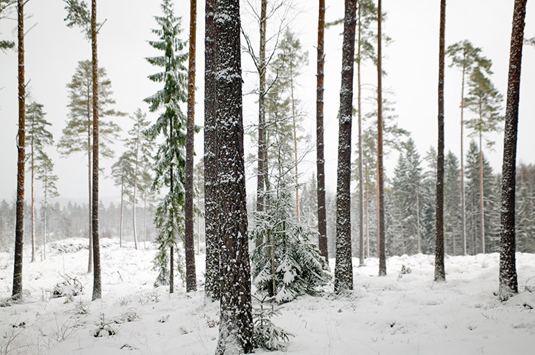 Research has shown that the more rigorous forests are thinned, the more resilient they can be under the impact of climate change.