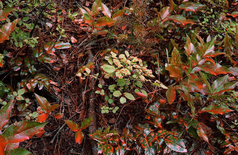 Chemical retardant coating vegetation (2018)