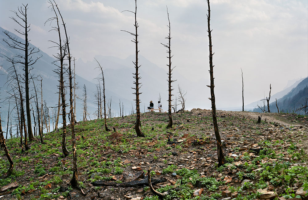 The aftermath of the Kenow Fire at Waterton Lakes National Park, photographed just a year after the 2017 fire